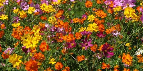 Planting Native Wildflowers tickets