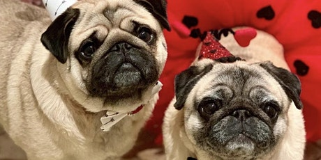 Halloween Pug Meet Up Hosted by @nycpugmeetup tickets