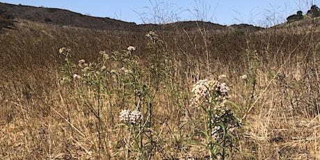 Mission Monarch: Milkweed silk and stalks tickets