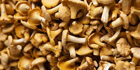 Mushrooms & Wine: A Magical Food & Wine Dinner with Chef Charles Draghi tickets