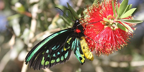 NaturallyGC - Great Southern Bioblitz Insect Walk tickets