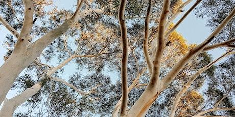 Christmas Tree Trail - Community Hike & Nature Meditation tickets