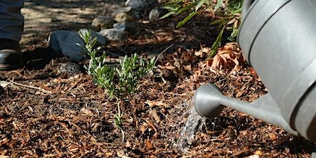 Mantenimiento básico de plantas nativas, un paseo con Alejandro Lemus boletos