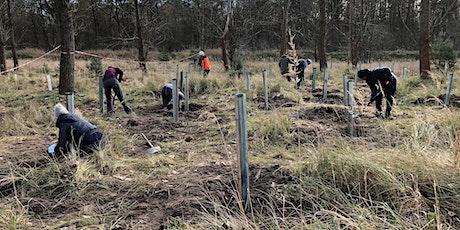 Baumpflanzaktion - Bäume für den Tegeler Forst Tickets