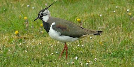 SSF21 -   Lapwing and other Breeding Waders of Bunduff, Co Sligo tickets