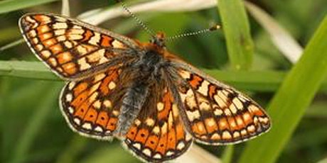 Will a butterfly be bothered by climate change? by Sophie Pavelle tickets