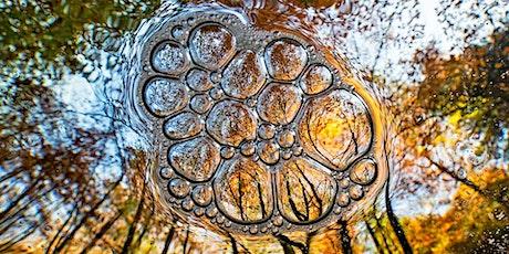 Photowalk – Herbstliche Low Light Fotografie in Dresden tickets