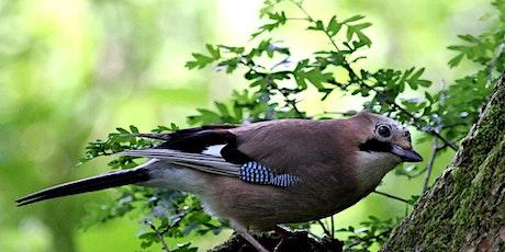 Woodland Bird Walk & Build a Bird House tickets