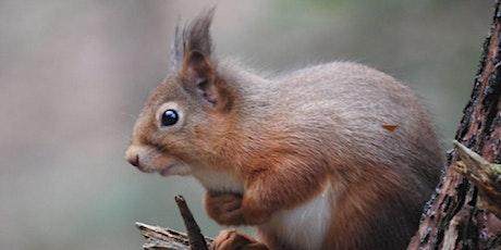 Crathes Castle Squirrel Safari tickets