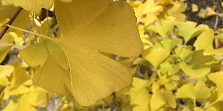December Drop-in Botanical Garden Tour tickets