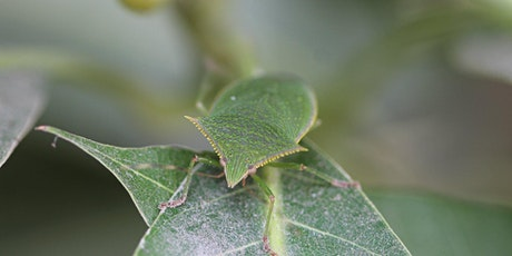 World of Invasive Species: Insect Edition! (VIRTUAL) tickets