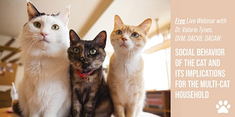 Social Cat Behavior & Its Implications in a Multi-Cat Household tickets
