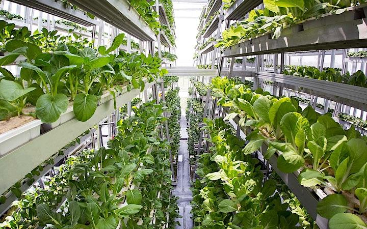 Sky Greens Urban Farming Tour image