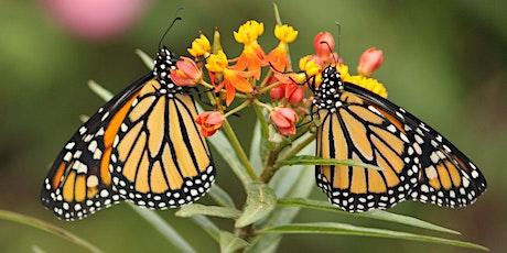 Migration Celebration – Meet the Monarchs tickets