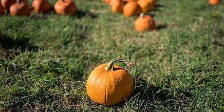 Central Park Pumpkin Scavenger Hunt tickets