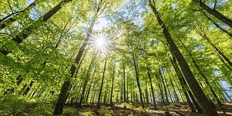 Kingley Vale Morning Winter Wellbeing Walks  Intoduction to Forest Bathing tickets