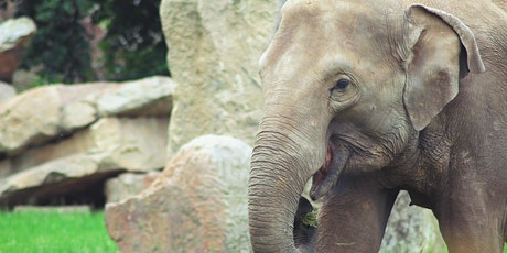 Free Virtual Playgroup Trial Session - Elephants tickets