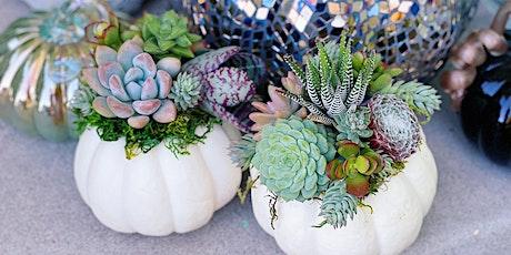 Succulent Crowned Pumpkin DIY in person workshop @TerraBella Nursery tickets