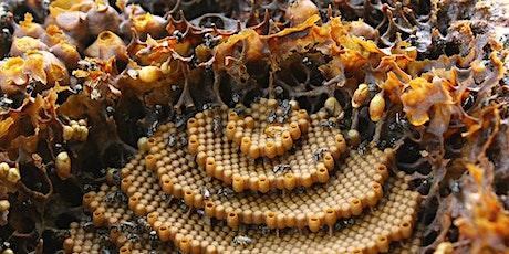Native Stingless Bee Workshop tickets