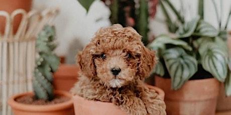 Adelaide - Huge Indoor Plant Warehouse Sale - Plants + Pups + Pets! tickets