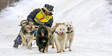Geballte Power im Wintertraum - Der Schlittenhunderennen Workshop Tickets
