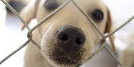 Intro to animal welfare tickets