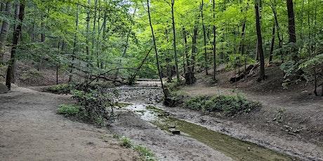 Mud Creek Walk: Eglinton Park to Evergreen Brickworks tickets