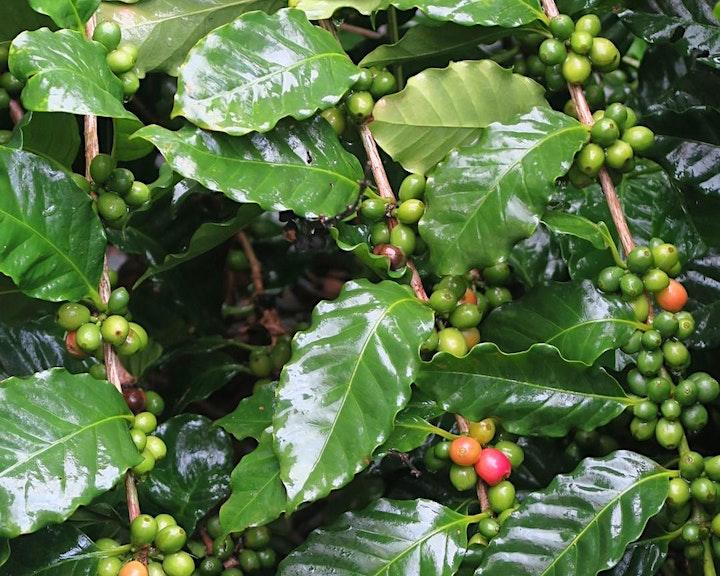 嚐賞港產咖啡豆之旅 2.0 image