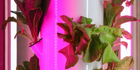 Hydroponics around the world: The opportunities and challenges tickets
