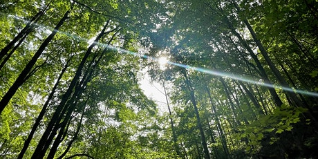 Free Forest Therapy Walk in High Park tickets