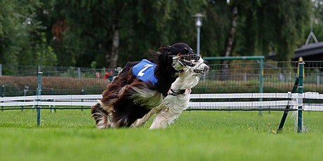 Junghund- & Startkastentraining;  Sprint-, Kurventraining, etc. Tickets