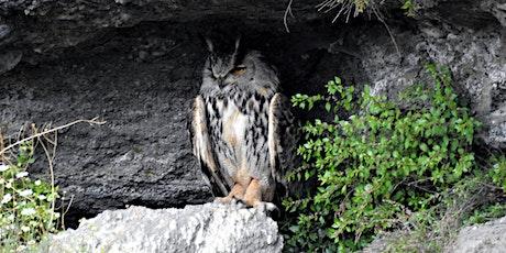 Armenia: Rich Birdlife in an Ancient Landscape tickets