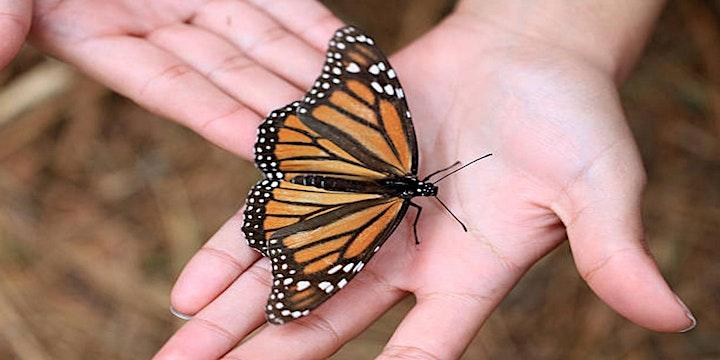 Imagen de Mariposa Monarca