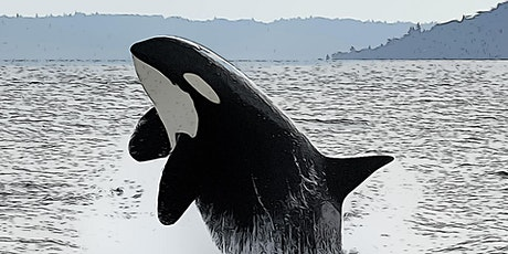 Fish and Chips in the Winter: A Killer Whale Tales science activity! tickets