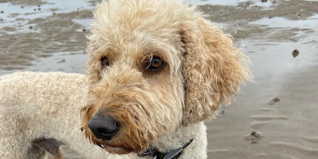 Doodle and 'Poo' breed Play tickets