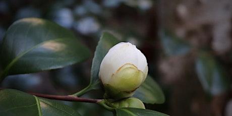 The Floral Art of Tea Ceremony : Robiraki tea ceremony tickets