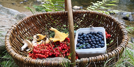 Foraging & Natural Dyeing Workshop tickets