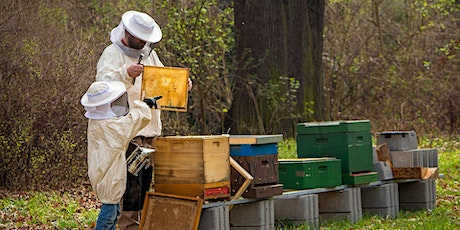 Becoming a Beekeeping Family in Piedmont North Carolina tickets