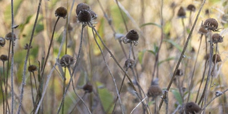 Lyndon Penner - Designing with Native Plants tickets