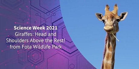 Giraffes: Head and Shoulders Above the Rest! from Fota Wildlife Park tickets