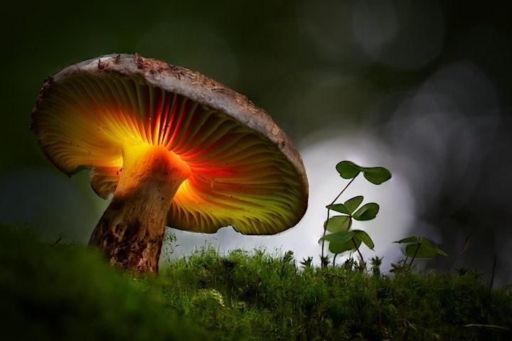 Afbeelding van Lightpaint van paddenstoelen