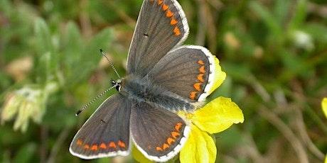 Butterfly Habitat Restoration tickets