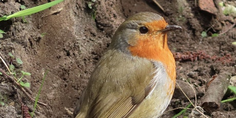 Birdwatching – Understanding Birds with Nature Stuff (Tuesdays) tickets