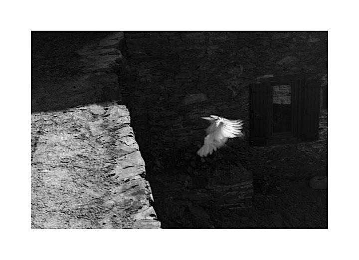 """Image pour Vernissage de l'exposition """"L'ENVERS DE LA LUMIÈRE"""" au Leica Store Lille"""