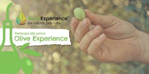 RURAL EXPERIENCE | Olive Experience