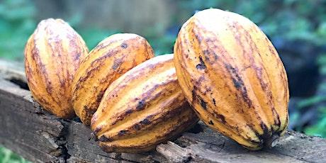 Taller de Rentabilidad del Cacao entradas
