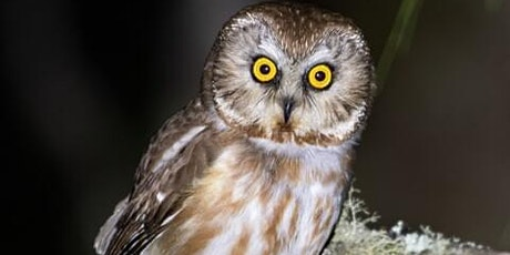 Evening Owl Walk with Owl Research Institute tickets