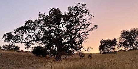 Naturalist Walk: Night Hike at Arastradero Preserve tickets