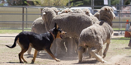 Working Dog Training tickets