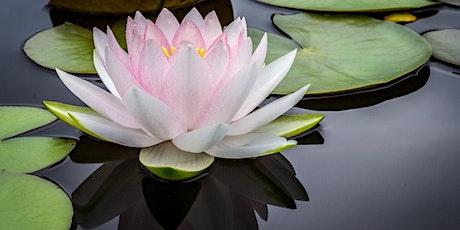 Mindfulness Meditation Class 10/21 tickets